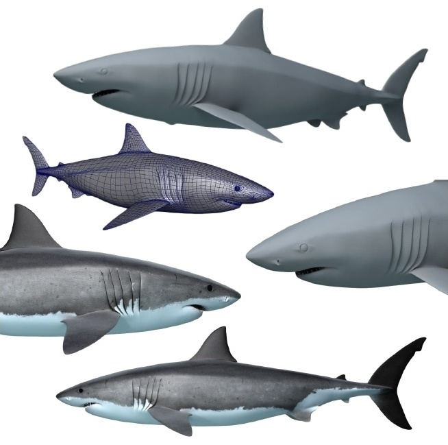 Shark Toys Great White : Now you can own a pet great white shark the creators project